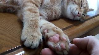 cat paws pads♥Feel good with Punipni cuteness♥funny cute cats video