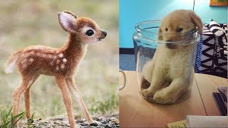 Baby Animals 🔴 Funny and Cute Cats and Dogs Videos Compilation (2019) Perros y Gatos Recopilación