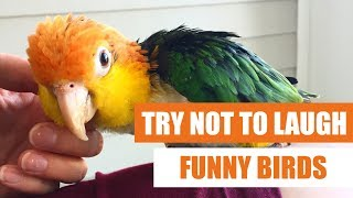 Try Not To Laugh – Funny Birds Video Compilation 2019 – Koa The Caique