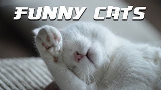 Fanny cats video. Cute cats video.