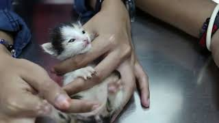 These kittens need massage to pee and poop