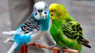 Funny Birds Awesome Moments In The Air || Brilliant Birds Video Compilation
