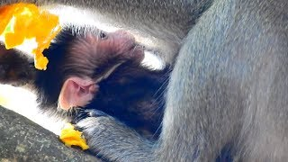 New Update Asia Newborn Baby Monkey April! So Cute Adorable Monkey!