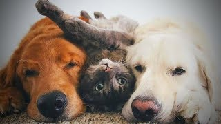 Cute Cats and Dogs 😻� Cats and Dogs Friendship (Part 2) [Funny Pets]