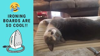 FUNNY CATS PLAYING TOGETHER ON IRONING BOARD | Crazy Playful Cats