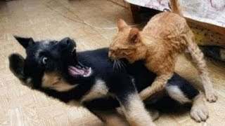 vERY fUNNY dOGS 4