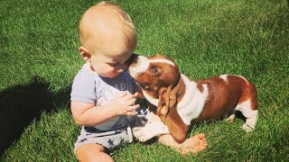 Funny Baby Playing With Puppies Dogs – Cute Dogs Video