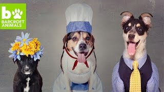 Rescue Dogs Get Dressed Up For Adoption: CUTE AS FLUFF