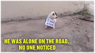Lonely Puppy Waits On Street For Someone – Who Can Take Him Home