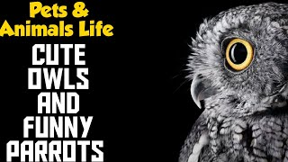 Funny and Cute Birds-Owls and Parrots Compilation  HD
