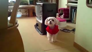 TOP 10 dog barking videos compilation 2020 – funniest and cutest puppies | funny pet video