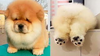 Cute dogs compilations