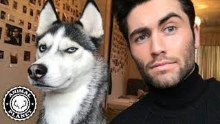 Tik Tok Animals 🔴 Funny Cats and Dogs Videos Compilation (2019) Perros y Gatos Graciosos Videos