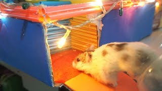 Hamsters Running In Maze Race – Funny Hamster