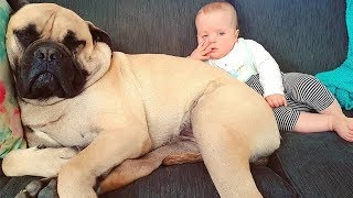 Cute Dogs And Adorable Babies Compilation 2019 – Dogs And Babies Are Good Friends | Puppies TV