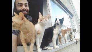 CUTE CATS WITH HIS OWNER (SARPERDUMAN COMPILATION)