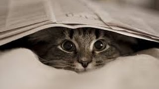 Cats and Kittens Like Hiding – Funny Cats Short Video