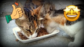 Cute Cats Videos (Tabby cat, Calico cat, White Cat, Black cat and kittens) #CatFood