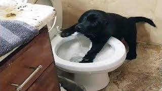 Naughty pets Funniest Videos – Funny Dogs and Cats