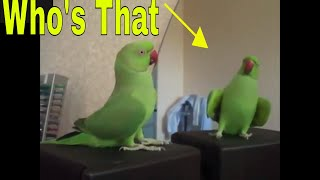 Birds Funny Reactions In Mirrors