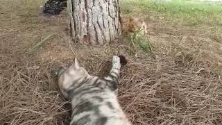 Cute cats playing games