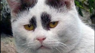 vERY fUNNY cATS 33