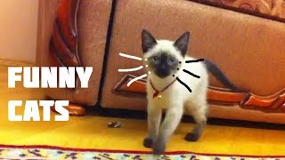 Funny cats stories! Funny Cats Compilation #6 feb 2018