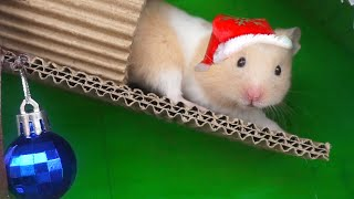 Christmas Tree Maze and Present for Funny Pet Hamster