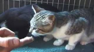Tough Love: Socializing Feral Kittens (Part 2 of 3)