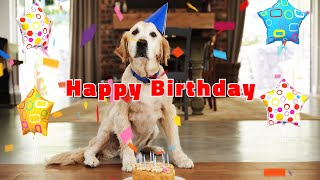 Happy Birthday Song | Happy Birthday To You | Cute Birthday Dogs & Cats