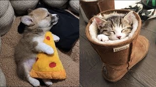 💗 Aww – Funny and Cute Animals Compilation 2019 💗 #44 – CuteVN
