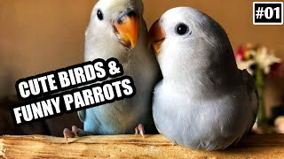 Cute Birds and Funny Parrots Compilation #01