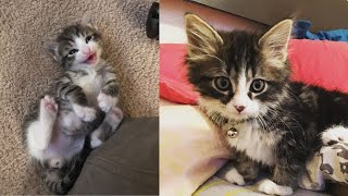 Baby Cats Adoption  – Cute and Funny Cat Videos Compilation #10 | Animals World