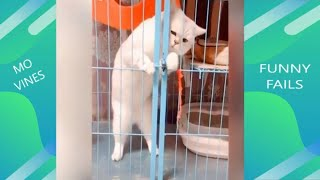 funny cats videos 2020 | Cute Cats Reaction to Playing Toy 😹Funny Cat's Reaction Cat toy Compilation