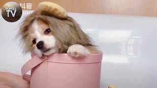 😍 Cute Puppies Doing Funny Things 2020 😍 Funny Cat & Dog Vines Compilation | Puppies TV