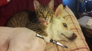 Funny Cats vs Dogs Compilation