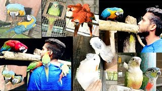 Verity Of Macaw II African Grew Parrots II Sunconure II Cockatoo Birds Breeding Farm In Gujrat/Surat