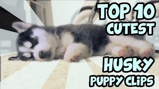 TOP 10 CUTEST HUSKY PUPPY VIDEOS OF ALL TIME