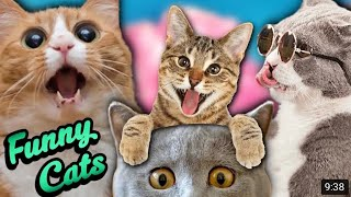Funny and Cute Cats/Baby Cats Videos Compilation 2020