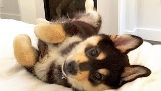 Cute Puppies And Cute Dogs ♥ Cute Puppies Doing Funny Things 2019 | Puppies TV
