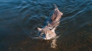 Funny Cats Falling in Water Compilation [NEW HD]