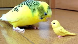 Forget CATS & DOGS! BIRDS are WAY FUNNIER! – It's TIME to LAUGH!