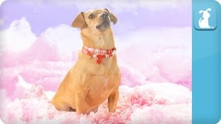 Katy Perry – California Gurls (ft Snoop Dog) – Katy Puppy – California Grrrs / Wide Awoof – Petody