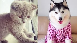 Cute Dogs And Cats Doing Funny Things 2019 | Cutest Puppies And Kittens Ever | Puppies TV
