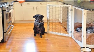 Funny Dogs Escaping Compilation | Genius Dog Escapes Cage