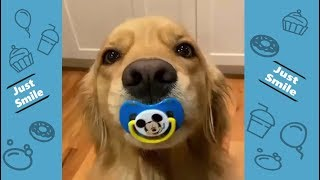 🐶Funniest Dogs and Cats Compilation🐱 – Try Not to Laugh – Best Cute Pet Animals😝