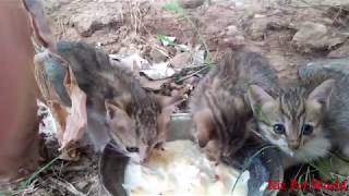 Cute Kitten Feeding|| Mother Cat Fun with baby||Homeless Kittens Feeding||Cat Fun with Baby