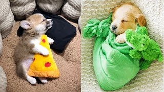 😍 Cute Puppies Doing Funny Things 2019 😍 #2 | Cute VN