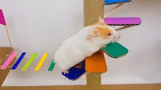 Funny Hamsters running through a colorful bridge maze | LOH