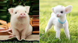 ♥Cutest Puppies Doing Funny Things 2020♥ #3 | Cute Animals